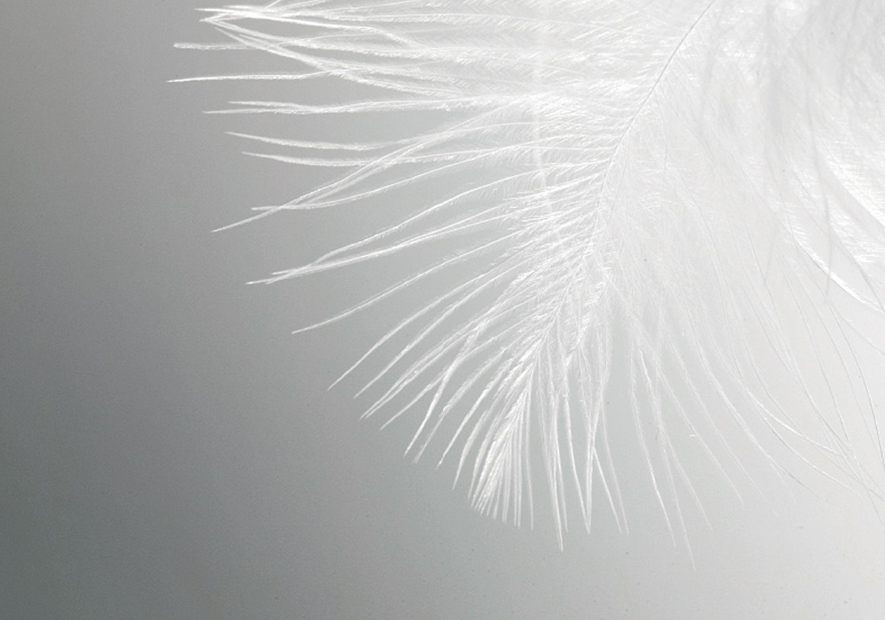 欧洲唯一白鸭种  名贵珍稀800<sup>+</sup> 高蓬松度  尊享贵族绒