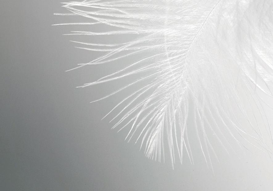 绿头鸭种,优越之选 800<sup>+</sup> 高蓬松度,轻柔更保暖